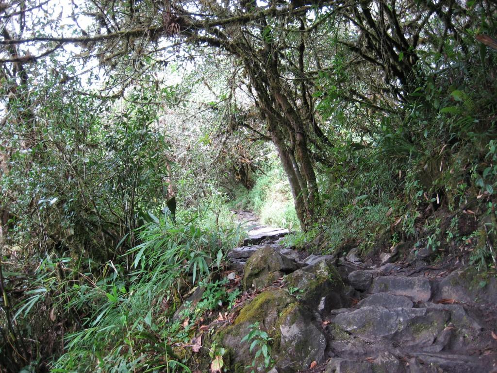 Cesta mlžným lesem