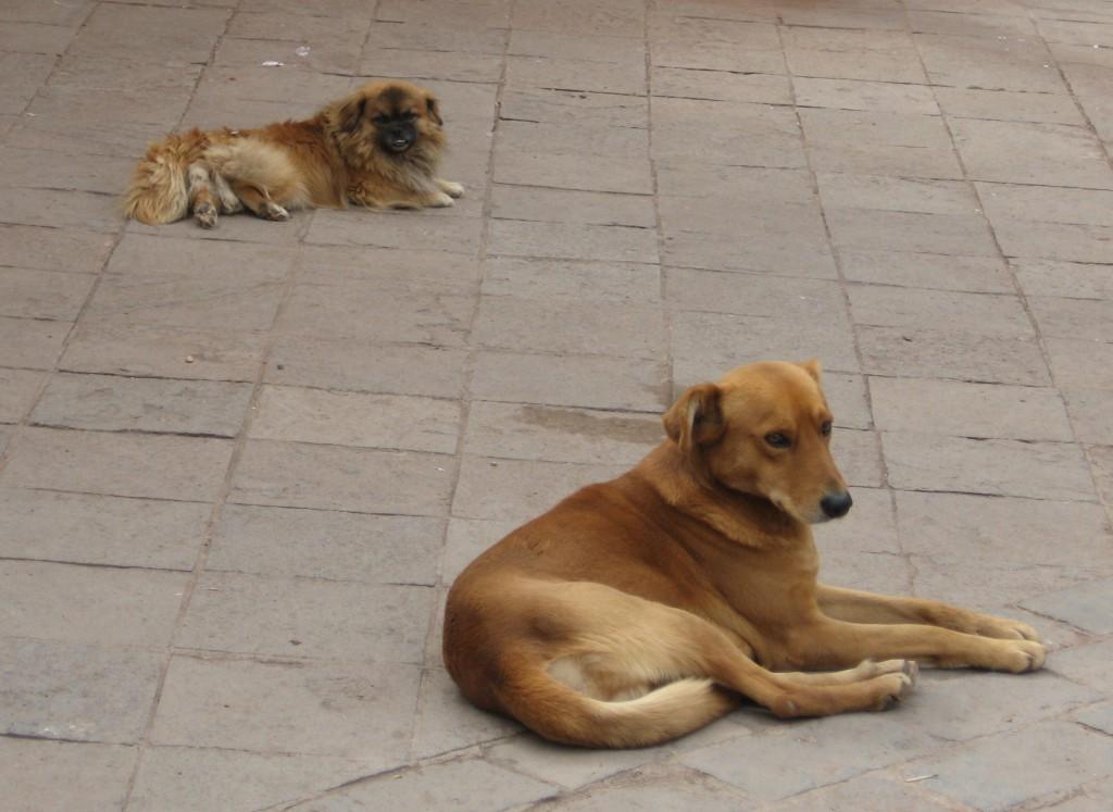 Pouliční psi